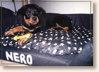 Nero on his new bed