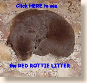 Red Rottie pup on the Rested Dog Inn's website